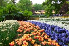 50-keukenhof-gardens